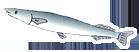さんま(秋刀魚)