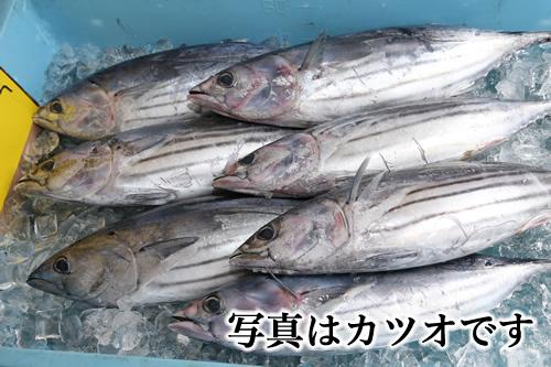 魚問屋丸八水産のおすすめ2